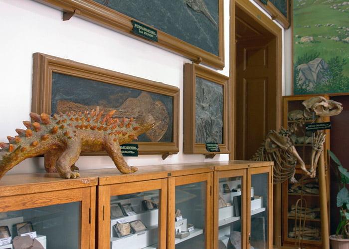 Muzeul de Paleontologie și Stratigrafie